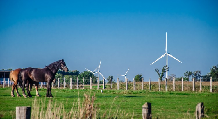 horses foreground turbines